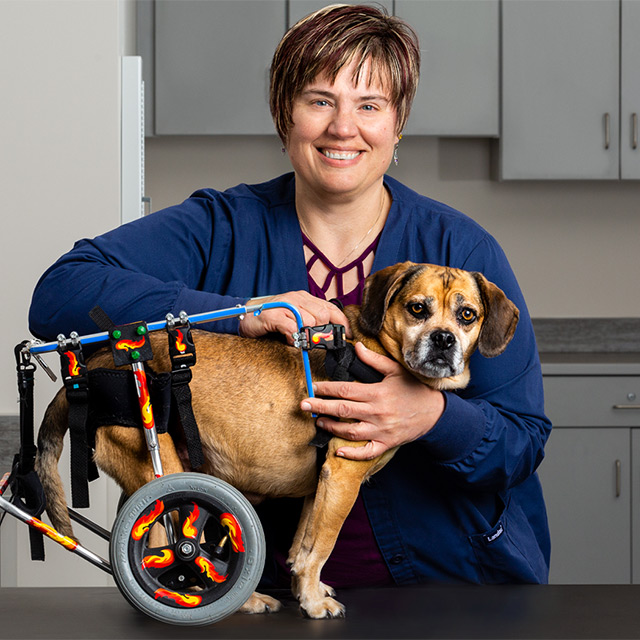 Female veterinarian with dog in wheelchair